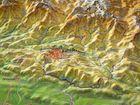 NEPAL mapa plastyczna w ramie 1:1 150 000 GEORELIEF (4)